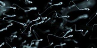 Kiêng xuất tinh sau 2h: Cải thiện tốc độ di động của tinh trùng trong tinh dịch