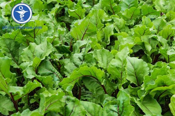 Nước ép củ cải đường bảo vệ gan