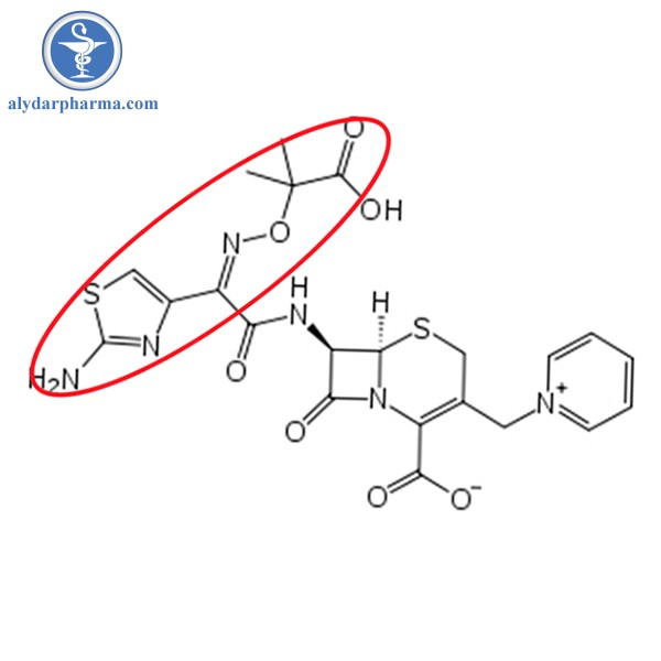 Ceftazidime bền với betalactamase do cấu trúc phần R cồng kềnh