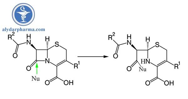 Phản ứng cộng hợp ái nhân của Cephalosporin