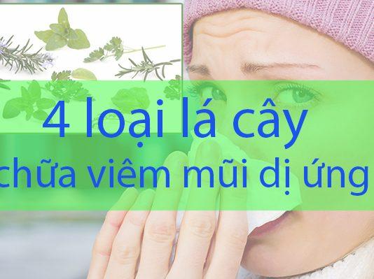Bật mí 4 loại lá cây chữa viêm mũi dị ứng một cách tự nhiên, ưu nhược điểm và những điều cần lưu ý