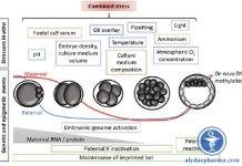 Phản ứng của phôi với stress từ công nghệ hỗ trợ sinh sản