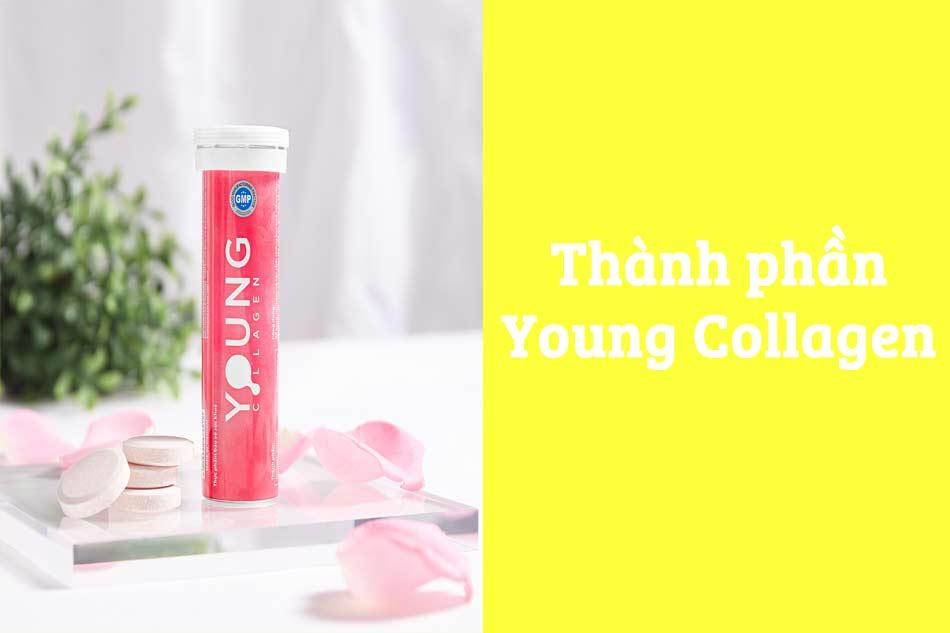 Thành phần Young Collagen